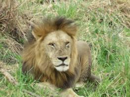 Safari, Tanzania. 2013