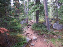 Hiking forest trails