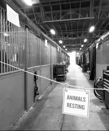 Animals Resting